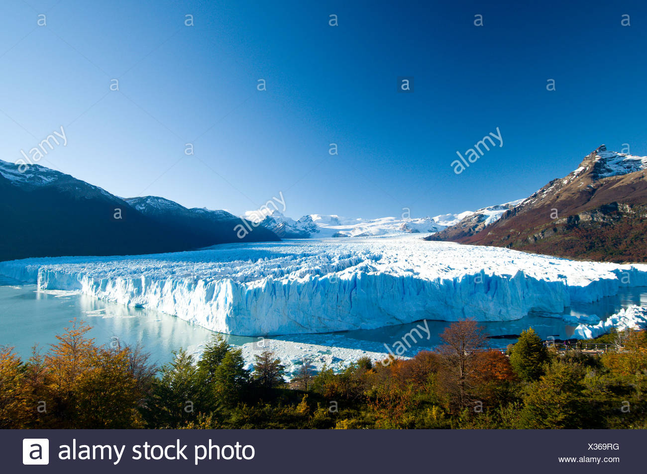 The Perito Moreno Glacier in autumn, calves into the waters of Lago Argentina, Parque Nacional Los Glacieres, Argentina - Stock Image