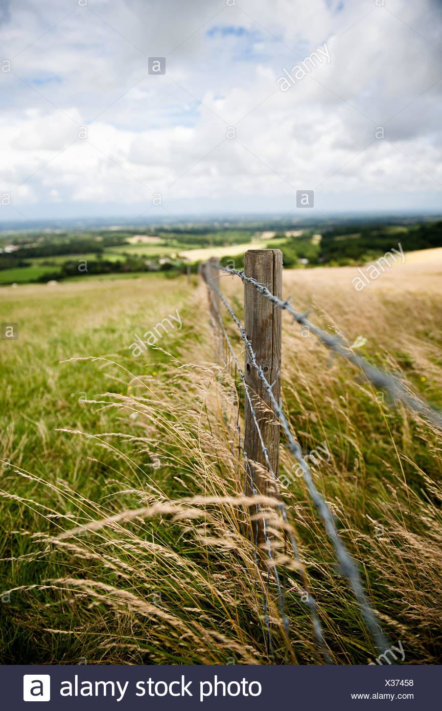 Razor wire fence in field - Stock Image