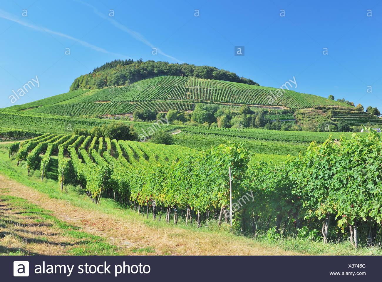 Black Photo Wine region Forest Germany Stock Kaiserstuhl O8wn0Pk
