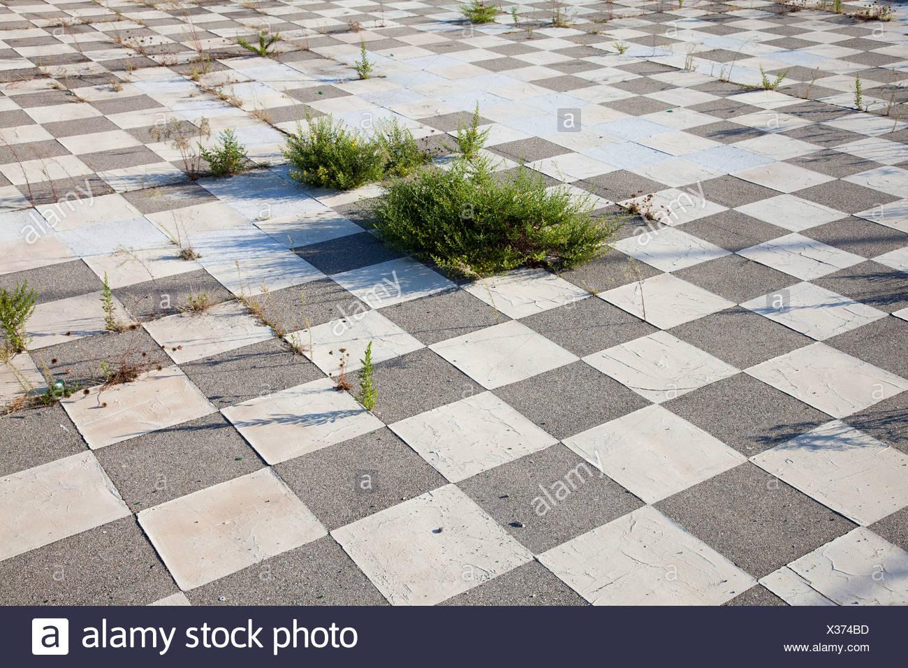 Plants growing through tiled floor - Stock Image