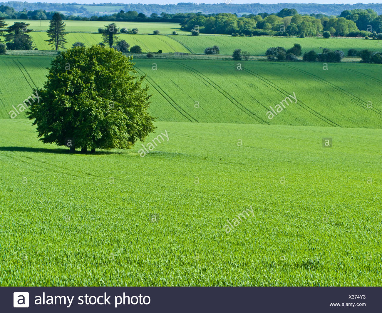 Green fields and tree - Stock Image