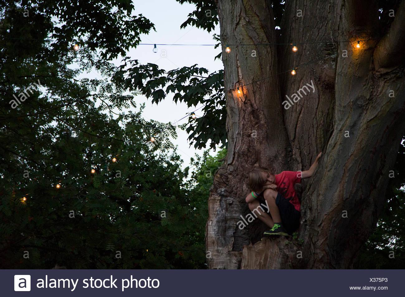Boy sitting halfway up tree - Stock Image