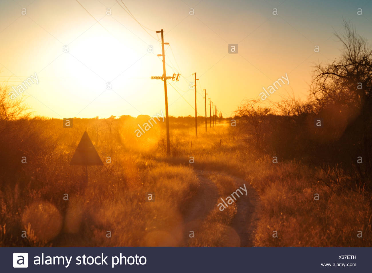 Africa, Namibia, Warm, clan, dusk, electrical, wires, field, high voltage, horizontal - Stock Image