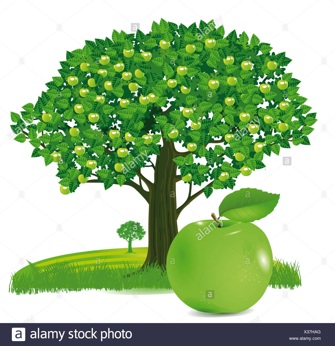 Apple with apple tree - Stock Image