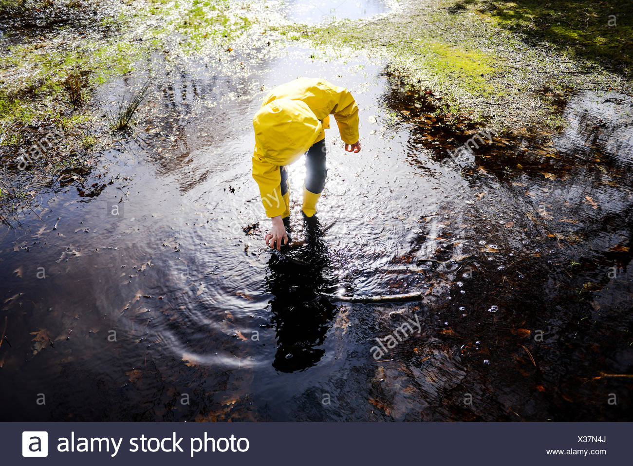Boy in yellow anorak bending forward in park puddle - Stock Image