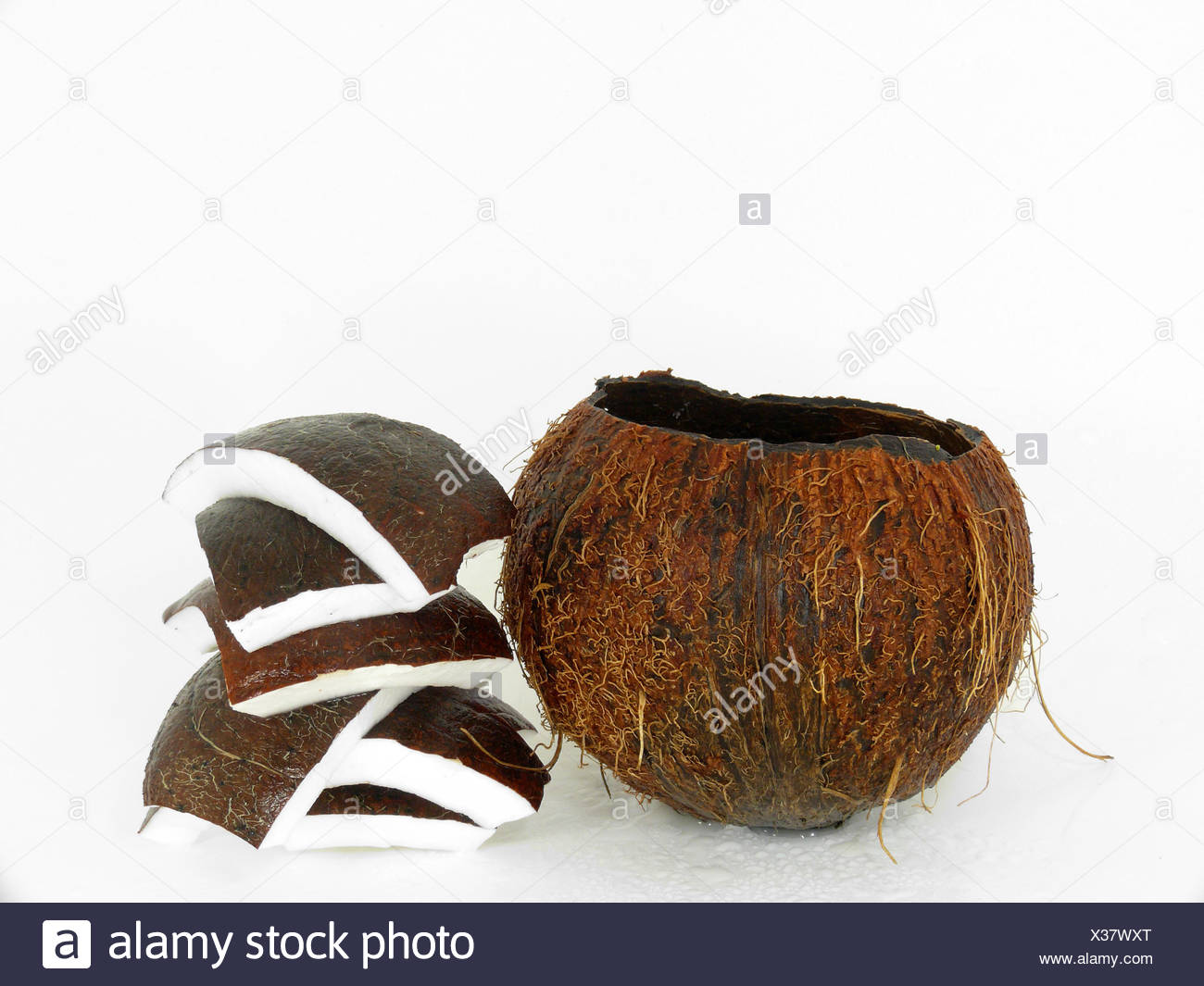 tropical entire - Stock Image