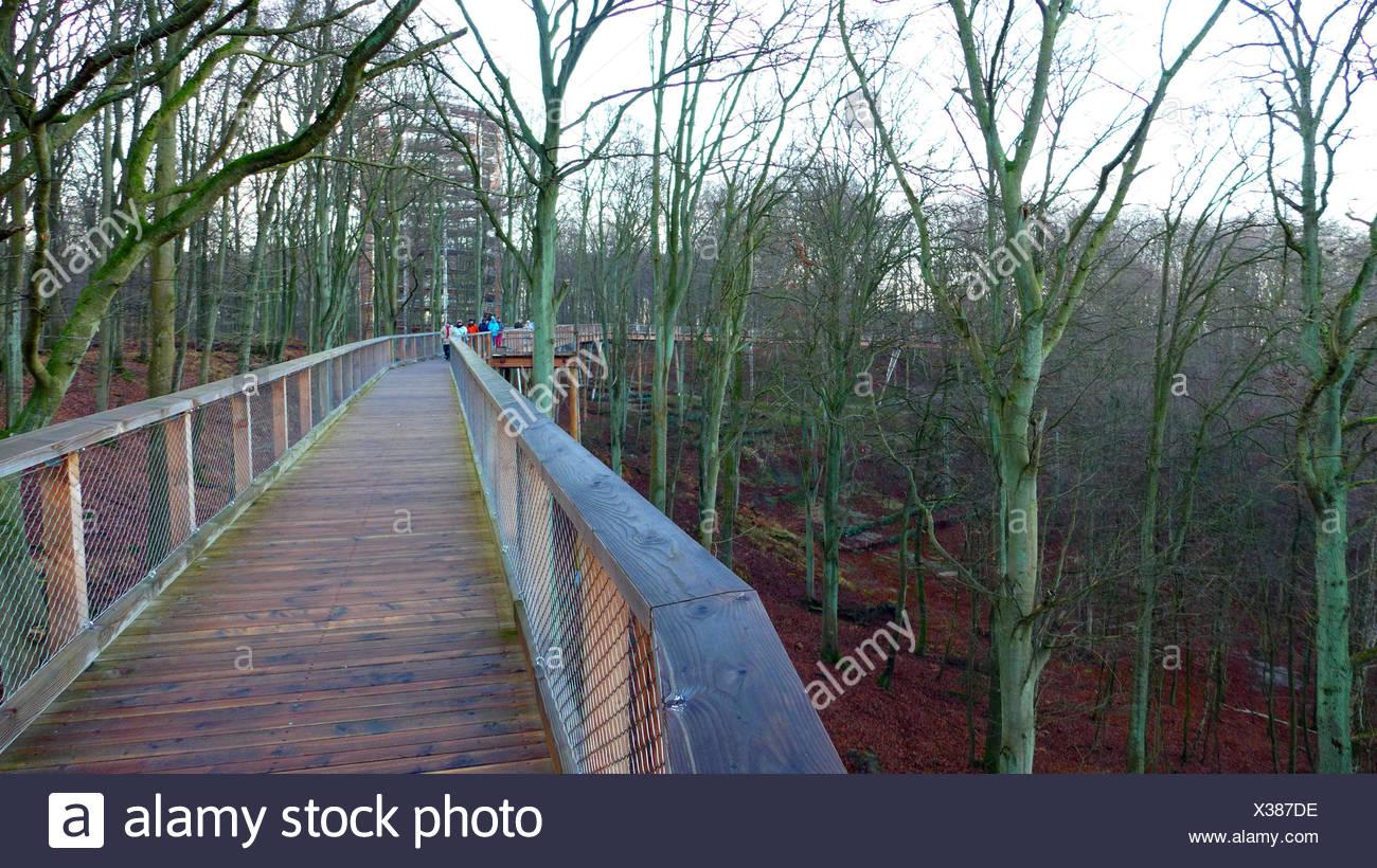 treetop trail, Germany, Mecklenburg-Western Pomerania, Ruegen, Prora - Stock Image
