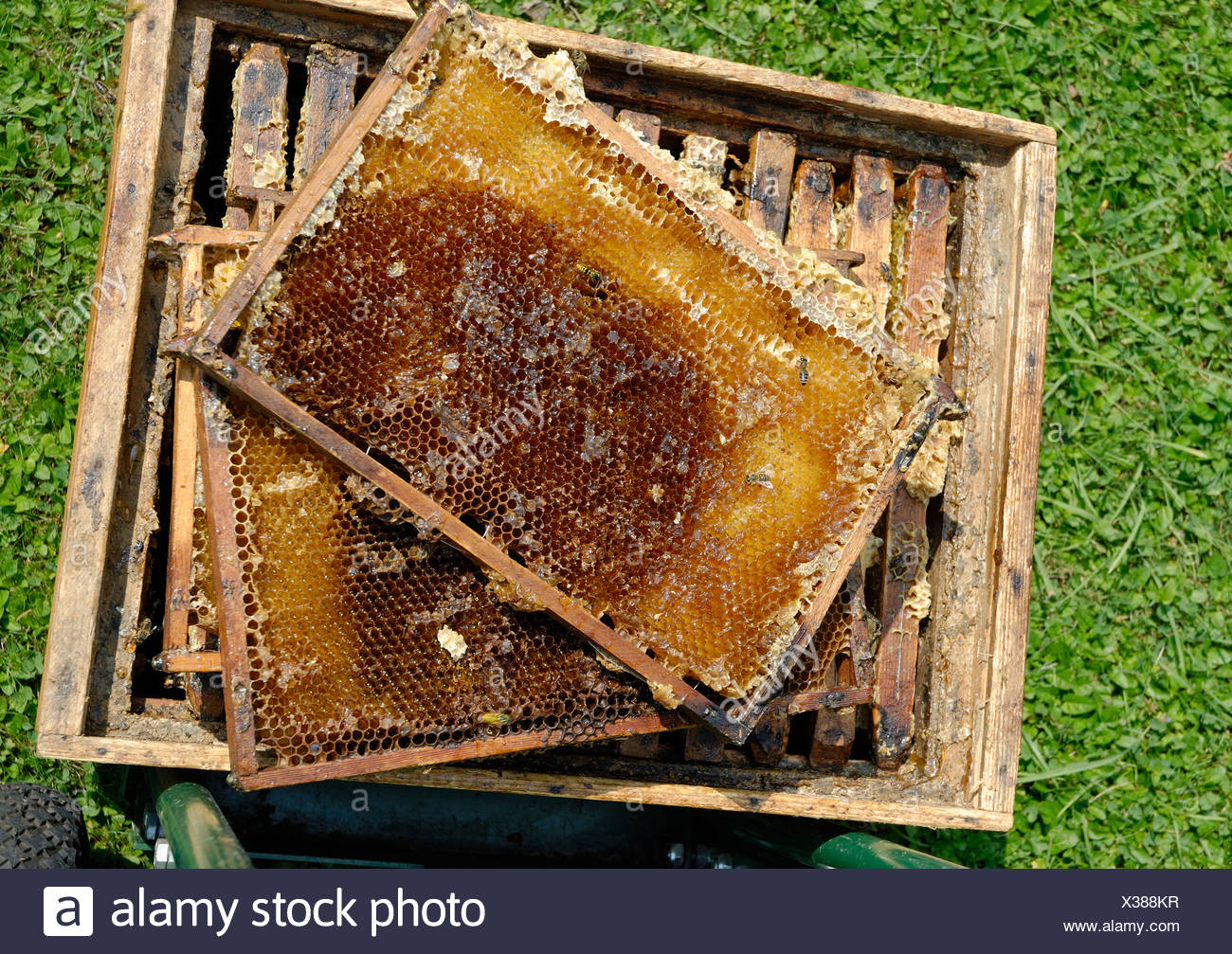 Recently strained, empty honeycombs - Stock Image