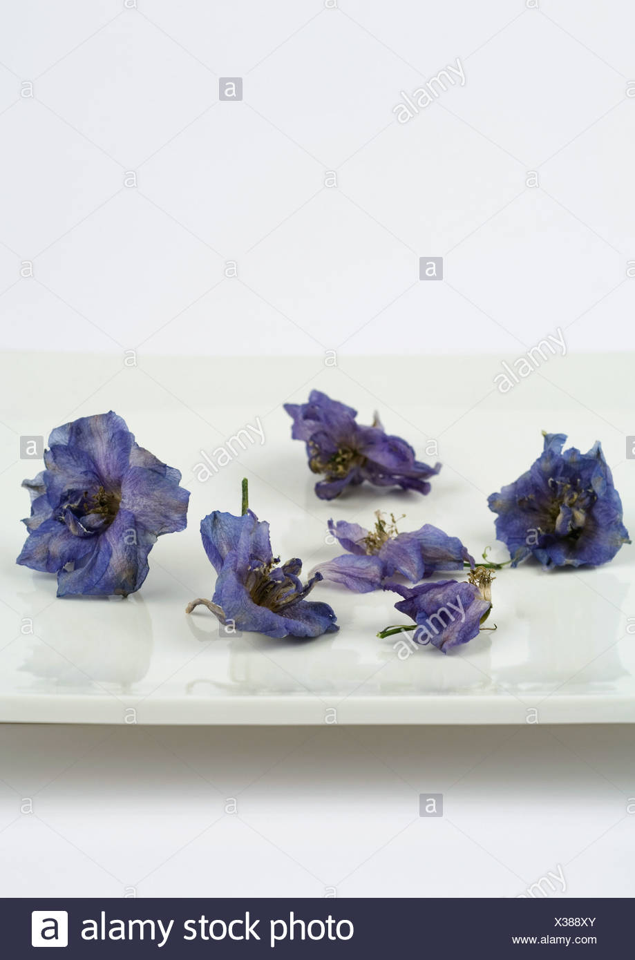 Dried flowers in square dish - Stock Image