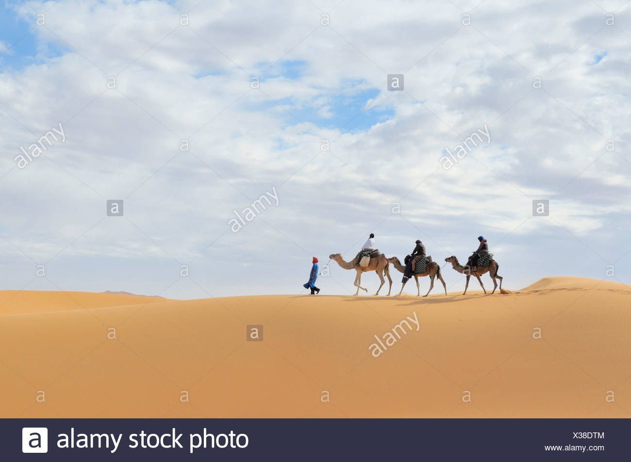 dromedary, one-humped camel (Camelus dromedarius), caravan in the desert, Morocco, Erg Chebbi, Sahara Stock Photo