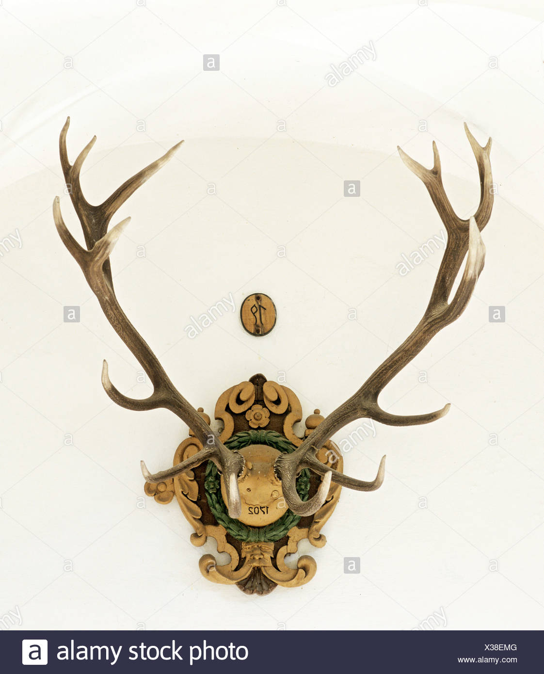 Deer antlers, trophy from 1702, 16 point antler - Stock Image