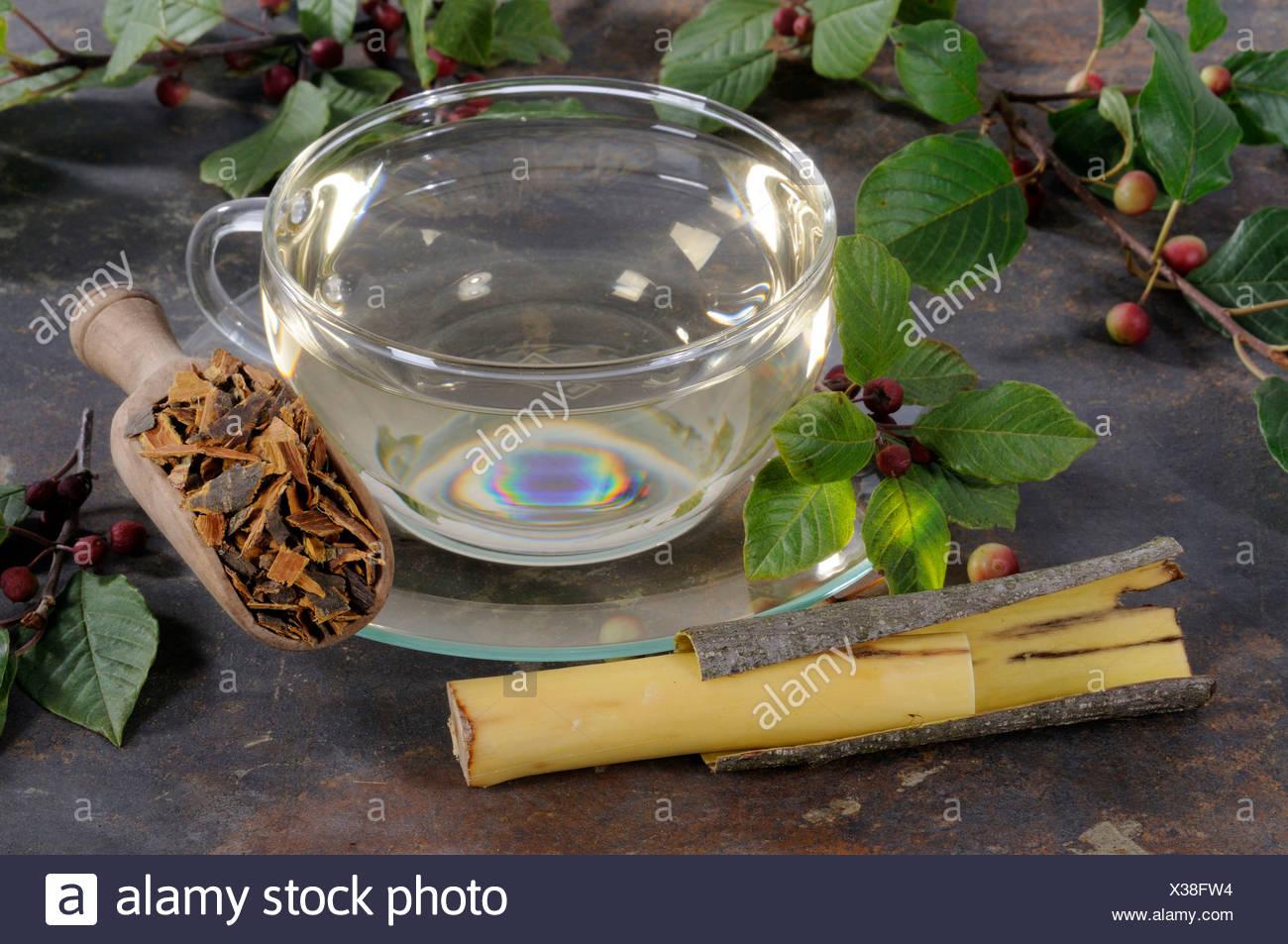 Alder buckthorn bark tea - Stock Image