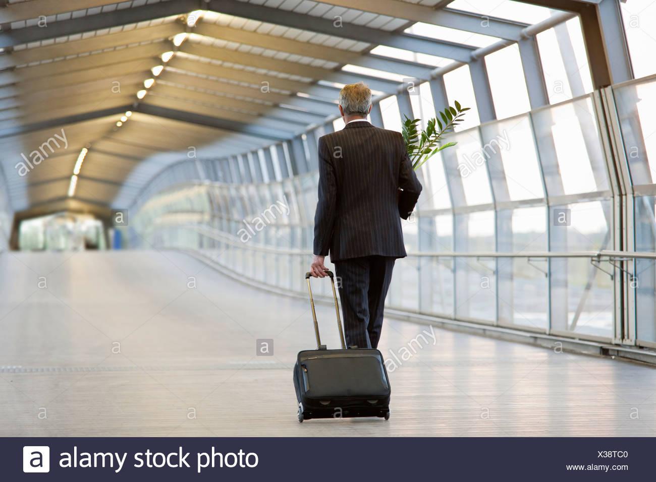 Businessman wheeling luggage with plant - Stock Image