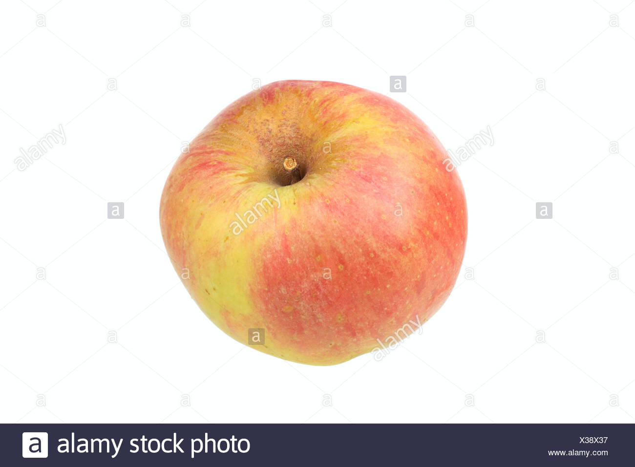 Apple, Anhalter variety, traditional sort for producing cider - Stock Image
