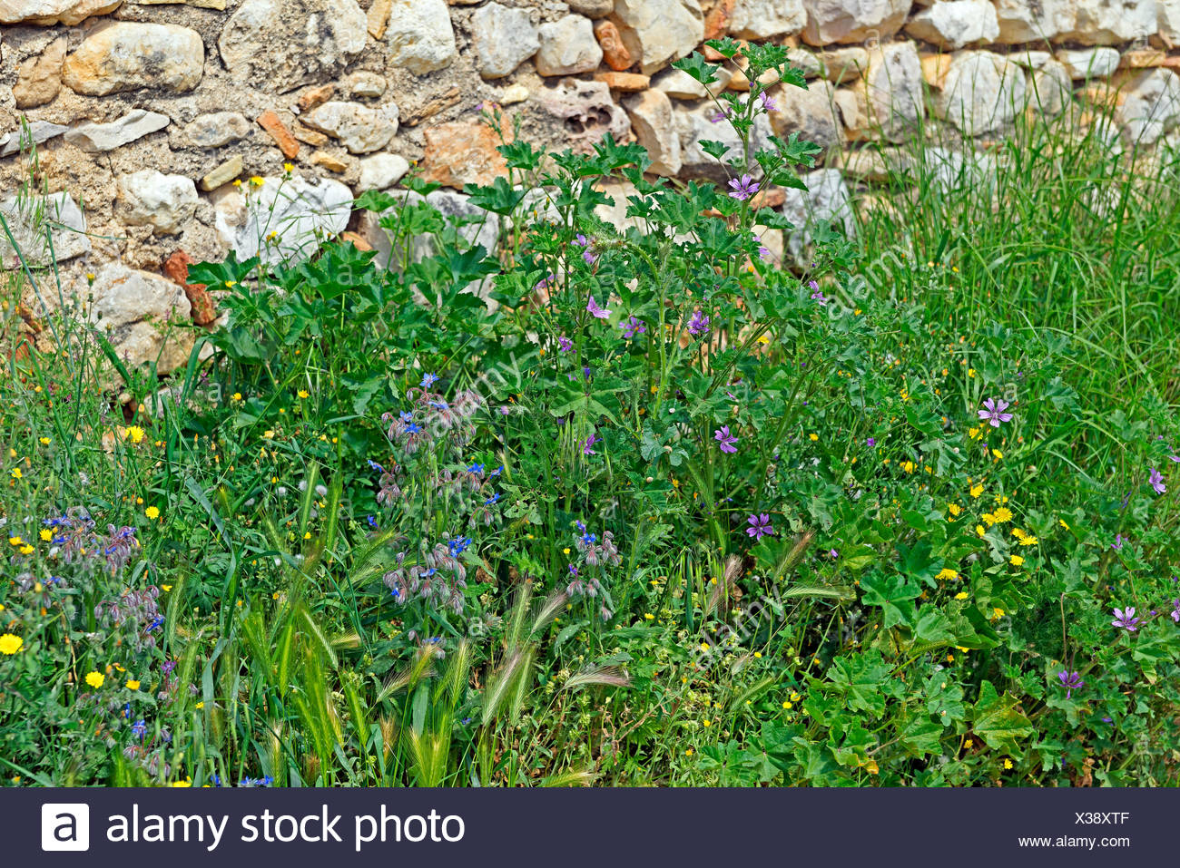 More poorly,natural stone,wild flowers,blossoms, - Stock Image