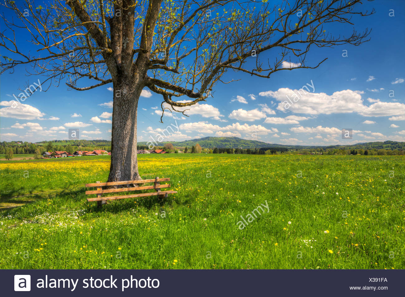 view over spring meadows near Oberhausen to the Hohenpeissenberg mountain, Bavaria, Upper Bavaria, Germany - Stock Image