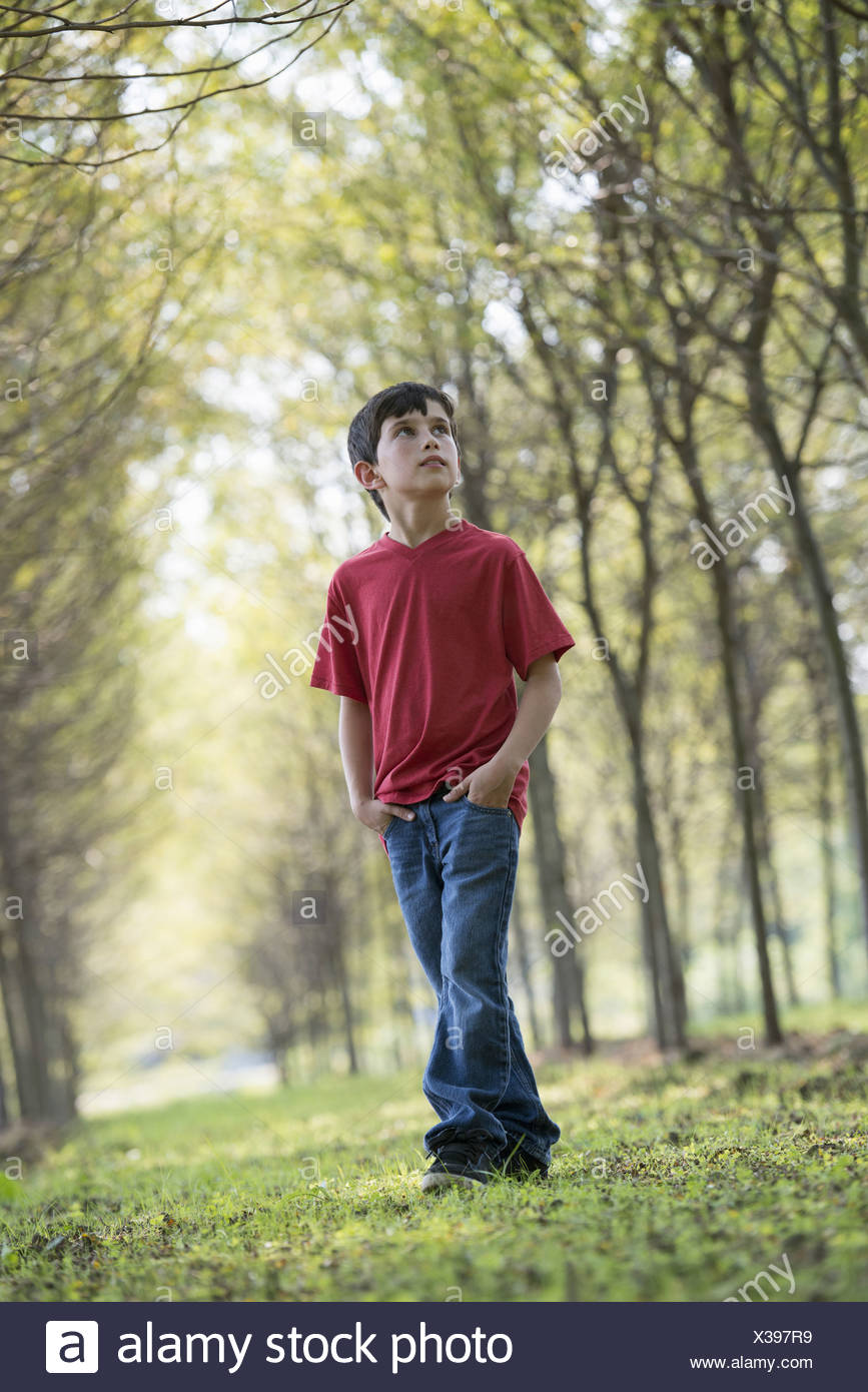 A young boy in  woodland looking around curiously. - Stock Image