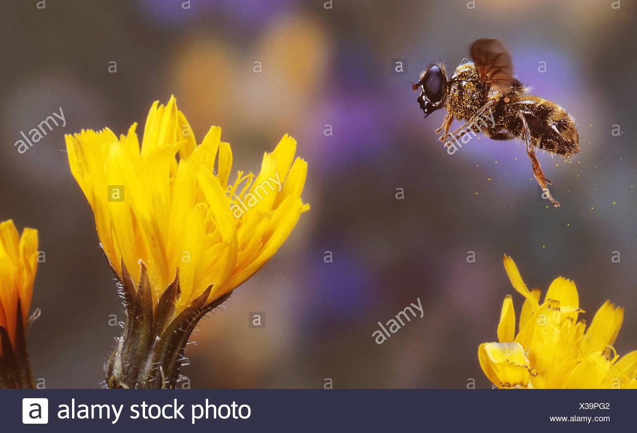 Fly with gelb - Stock Image