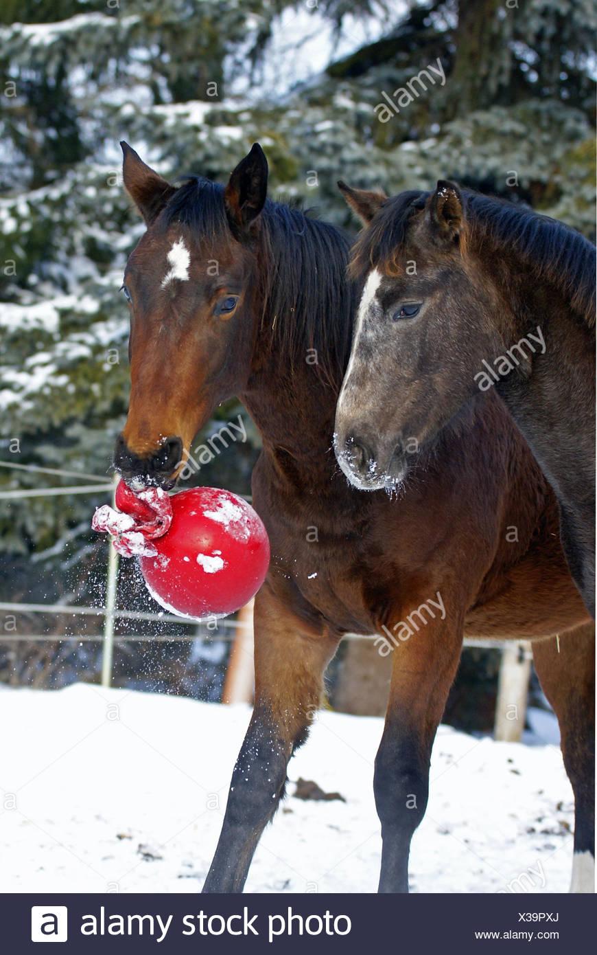 playing horse - Stock Image