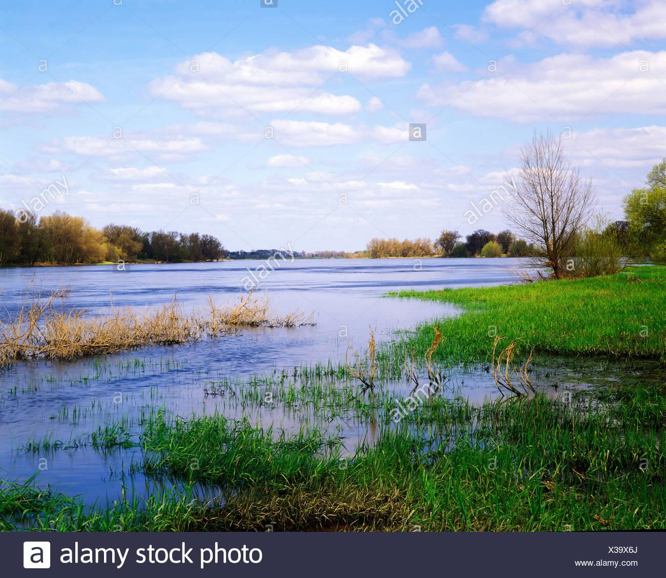 Elbe wetlands near Arneburg, Saxony-Anhalt, Germany, Europe - Stock Image