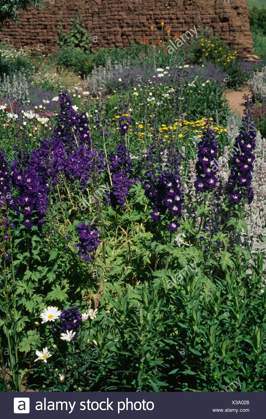 Blue delphiniums in summer border in country garden - Stock Image