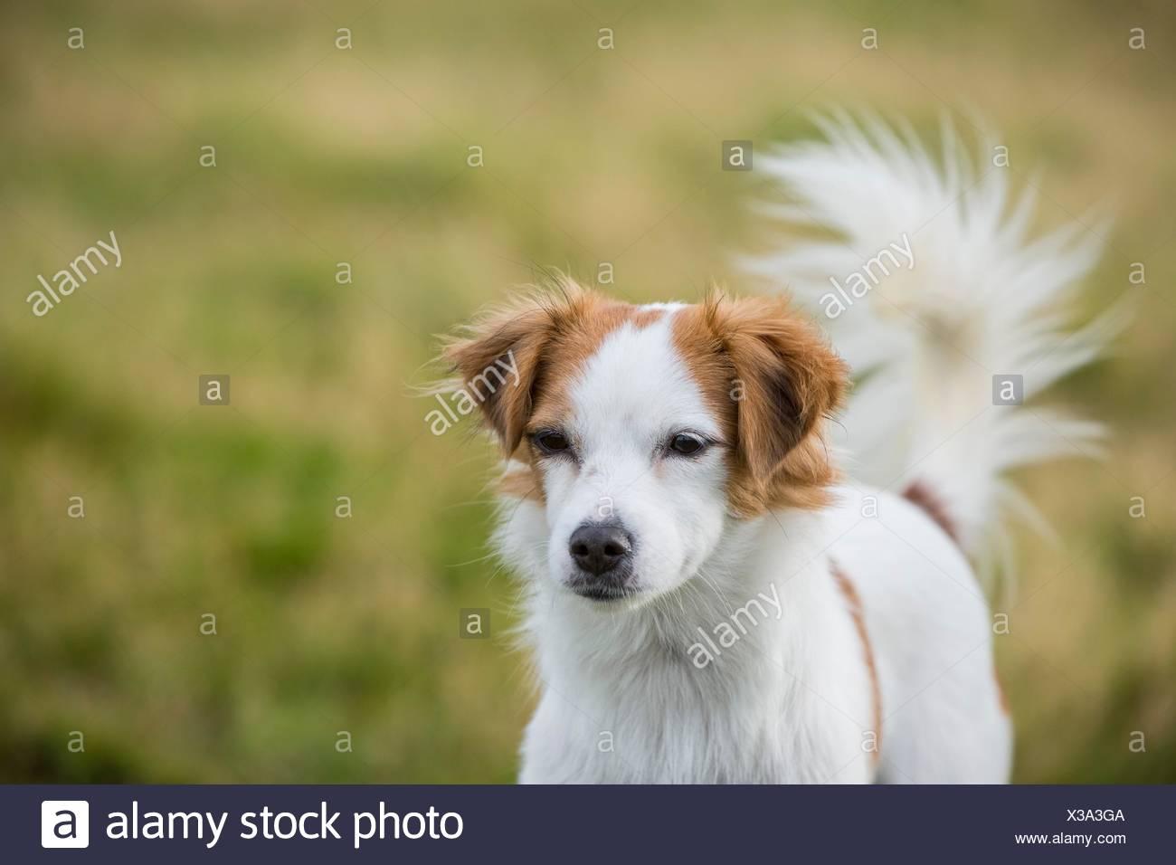 Portrait of female mongrel dog - Stock Image