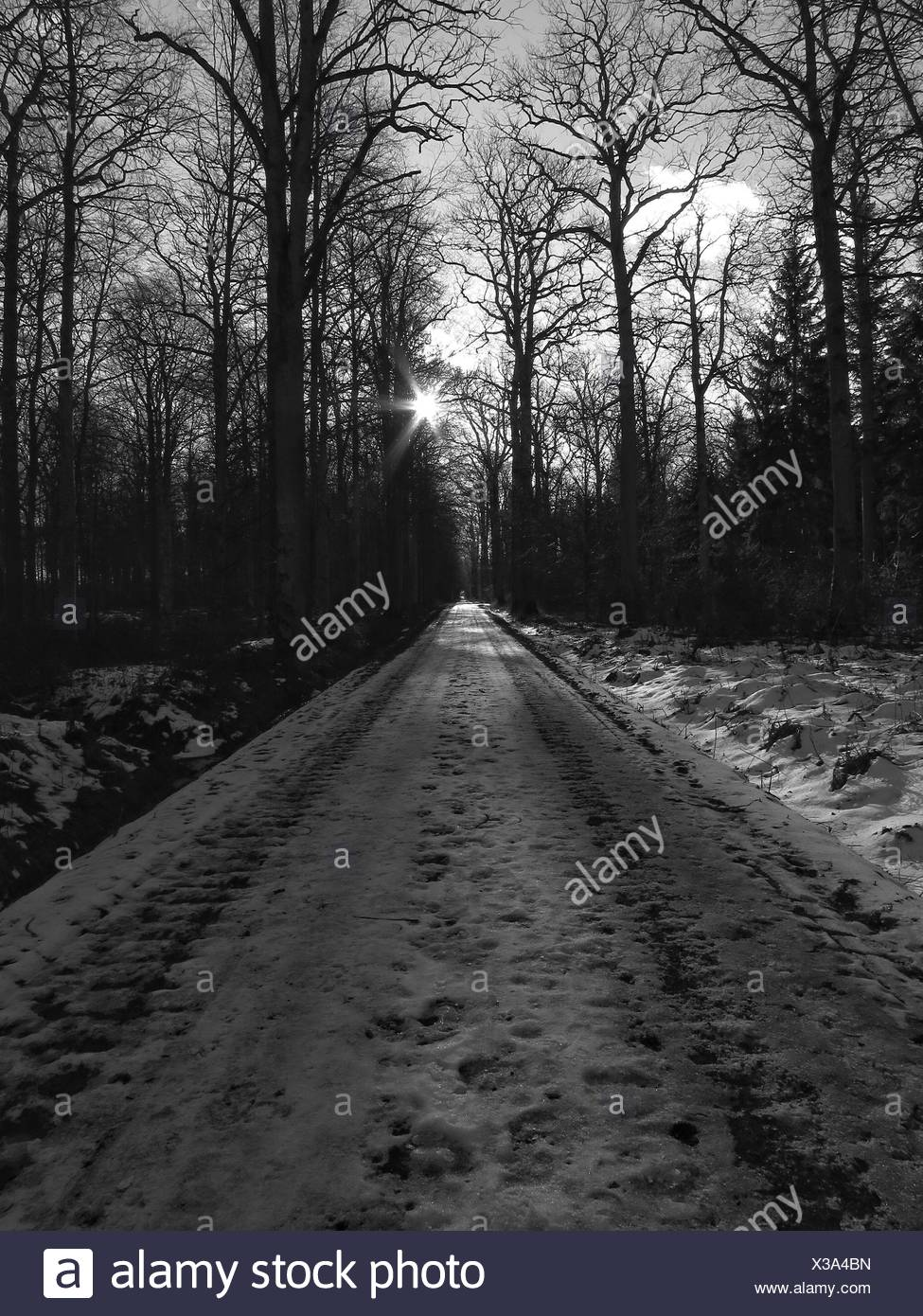 Snow Covered Road Passing Through Forest - Stock Image