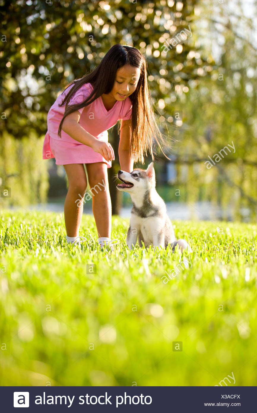 pet dog puppy - Stock Image