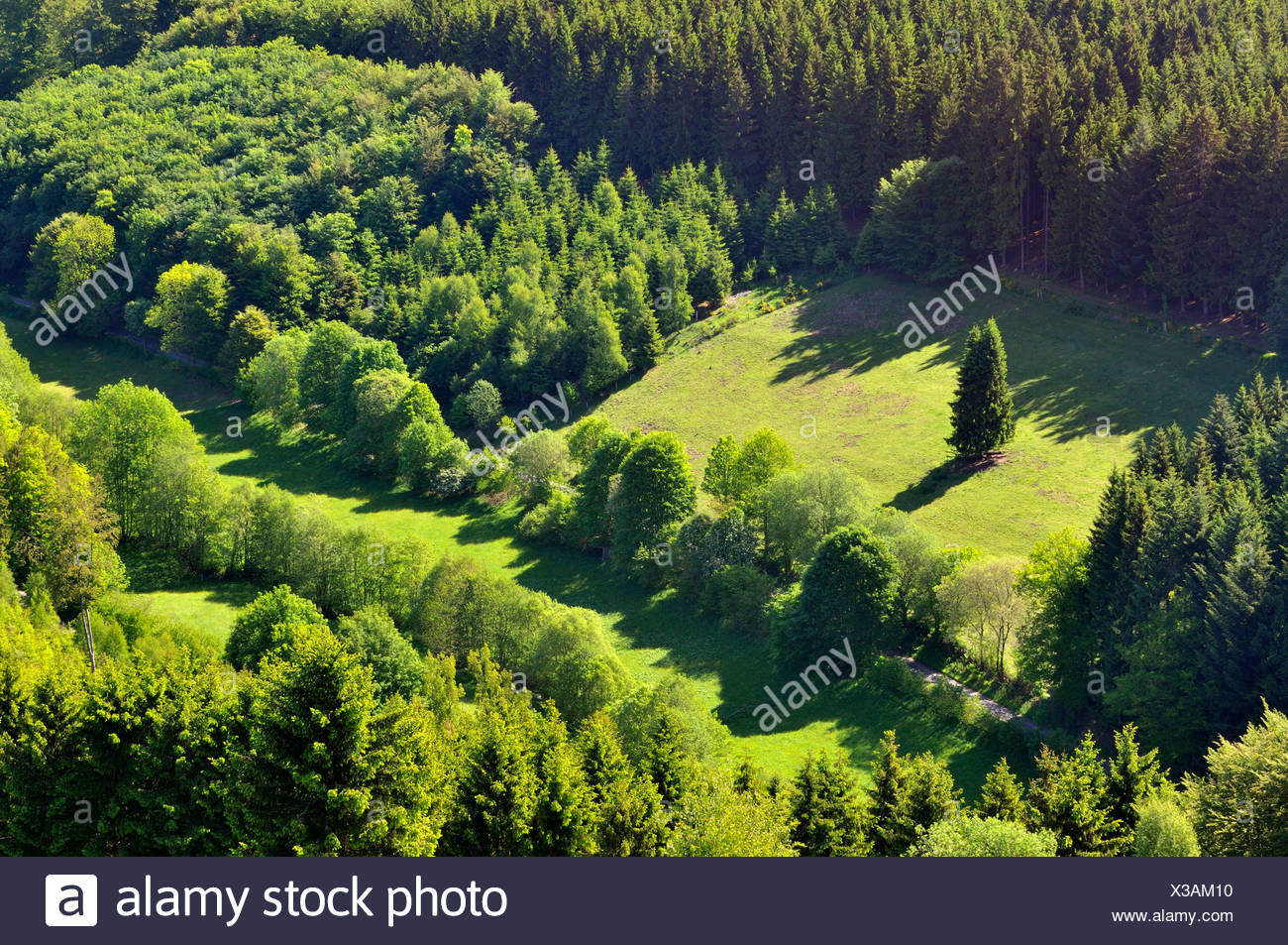 view of a mixed forest and cultural landscapes, Germany - Stock Image