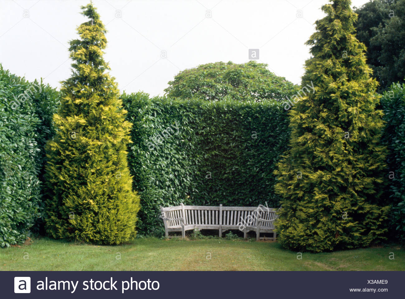 Conifers either side of semi-circular wooden seating against tall clipped hedge in large country garden - Stock Image