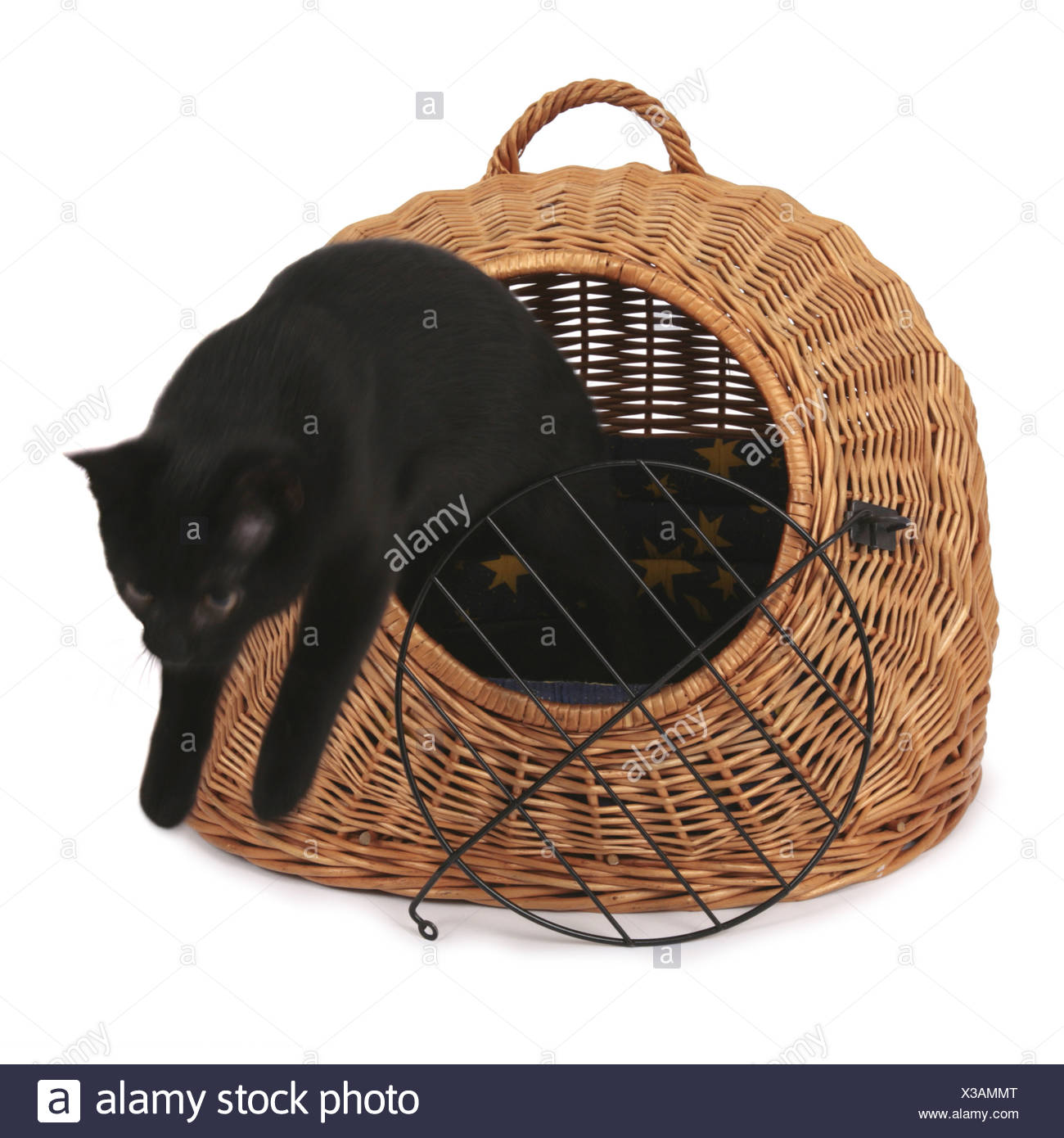 domestic cat, house cat (Felis silvestris f. catus), cat jumping out of cat basket - Stock Image