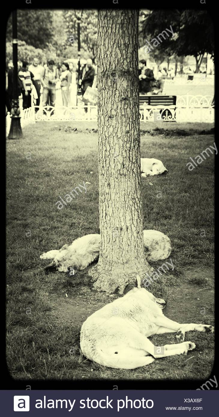 Dogs Relaxing In Park - Stock Image