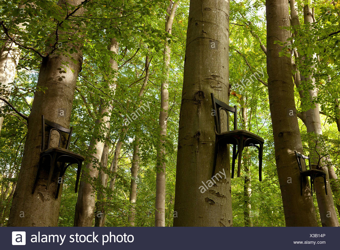 Chairs attached to tree trunks high up in forest - Stock Image