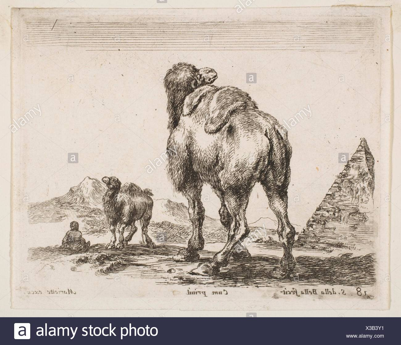 Plate 18: camel viewed from behind with pyramid at left, from 'Various animals' (Diversi animali). Series/Portfolio: 'Various animals' (Diversi - Stock Image