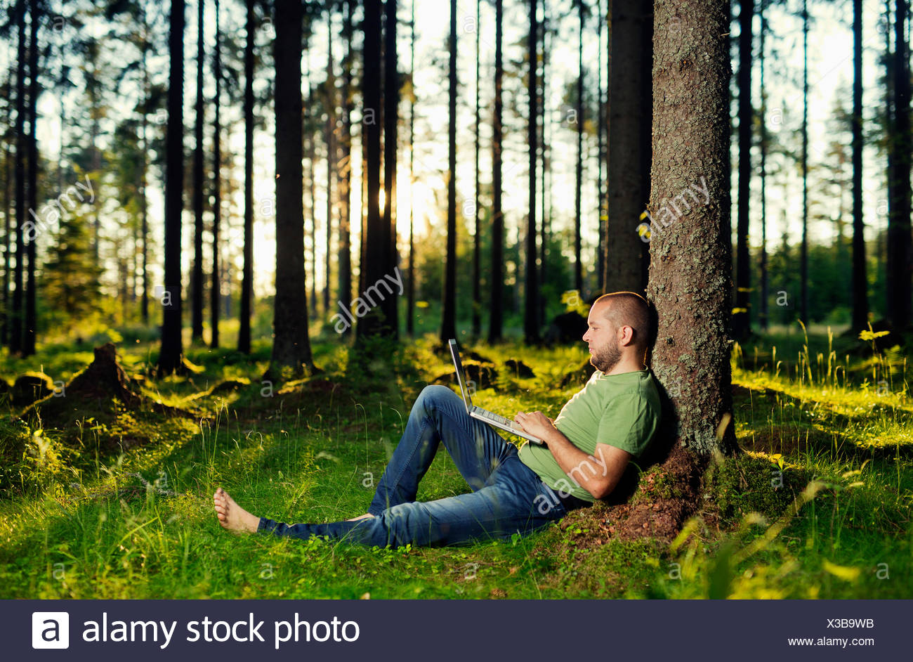 Man sitting by tree in spruce forest, using laptop - Stock Image