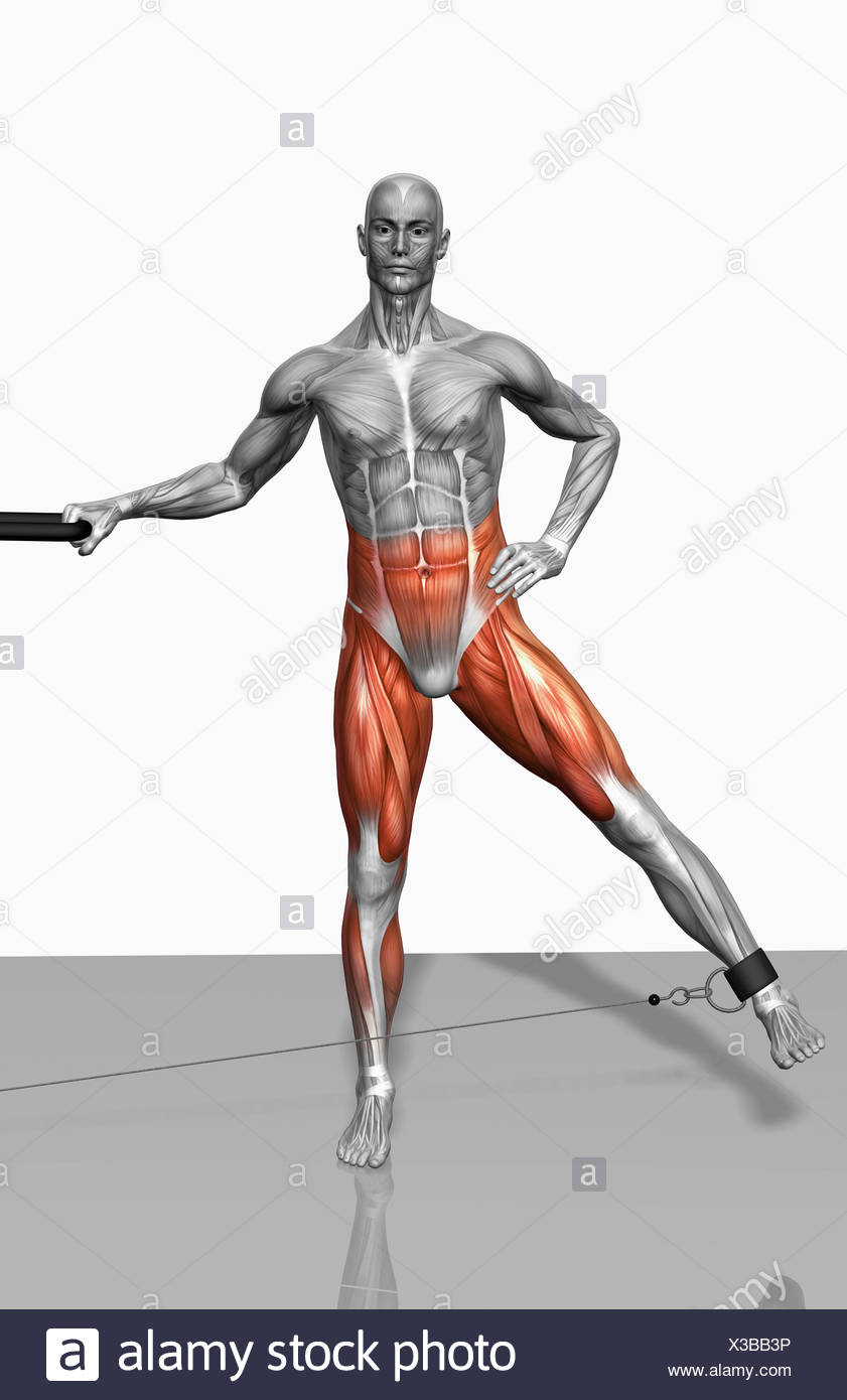 Cable leg abduction - Stock Image