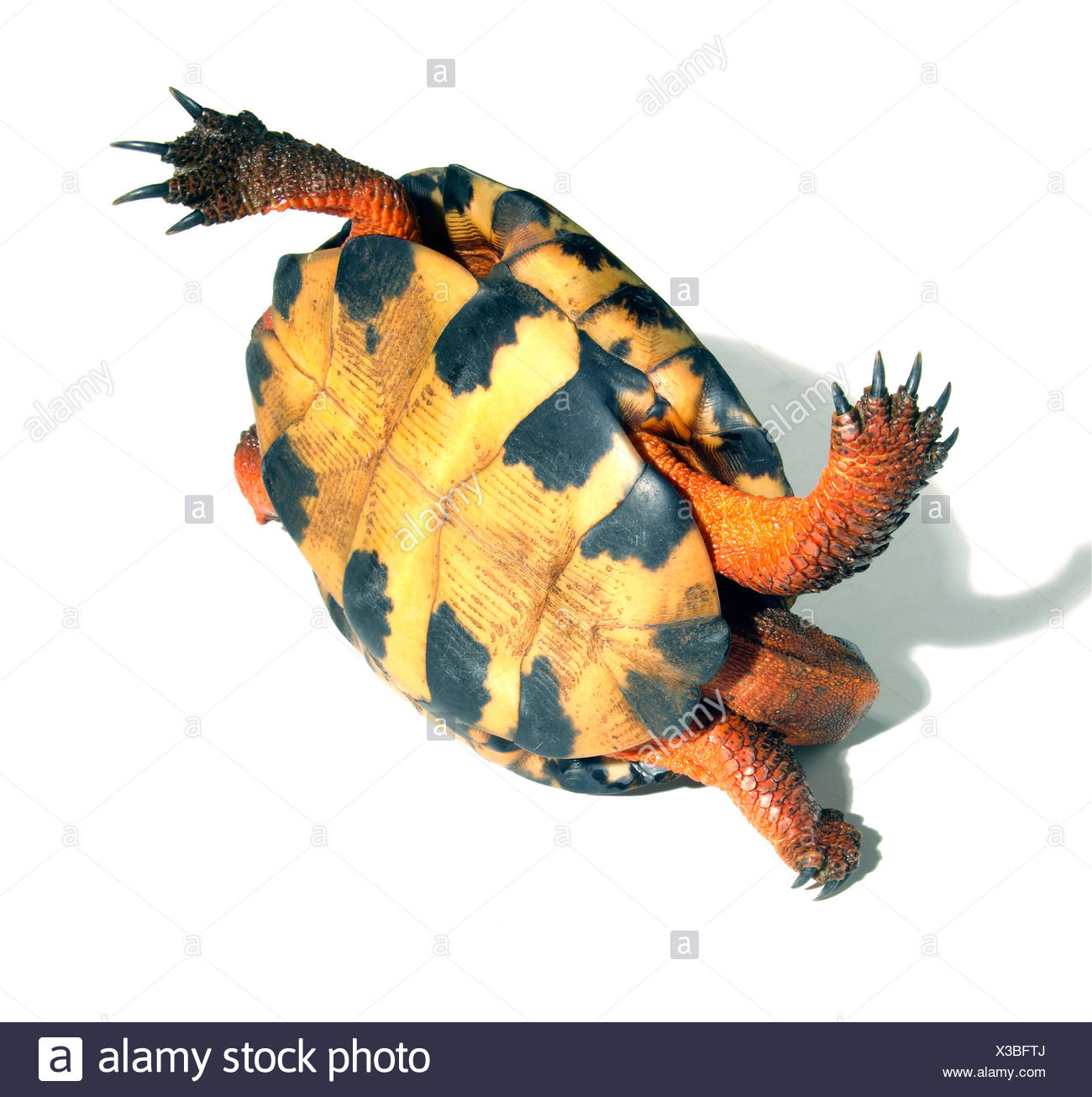 Close-up of a tortoise upside down Stock Photo