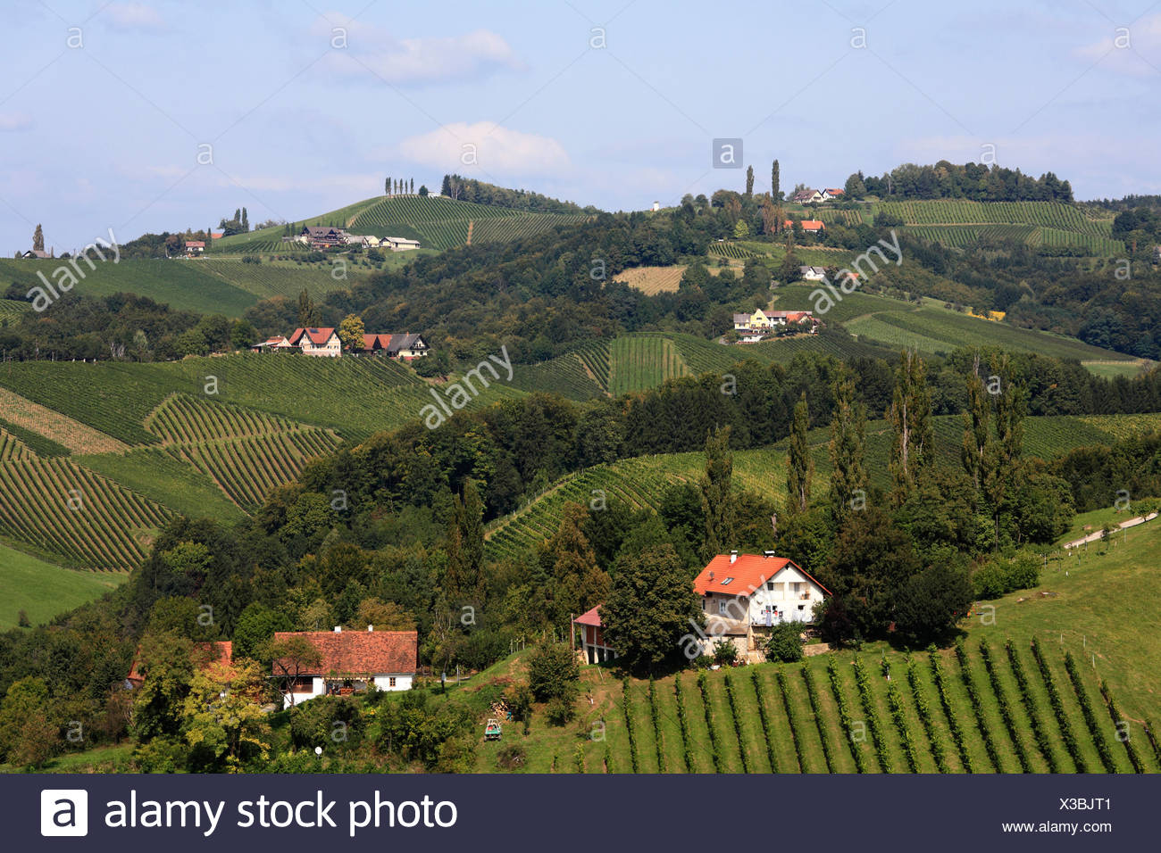 Vineyards in Langegg, Southern Styria, Austria, Europe - Stock Image
