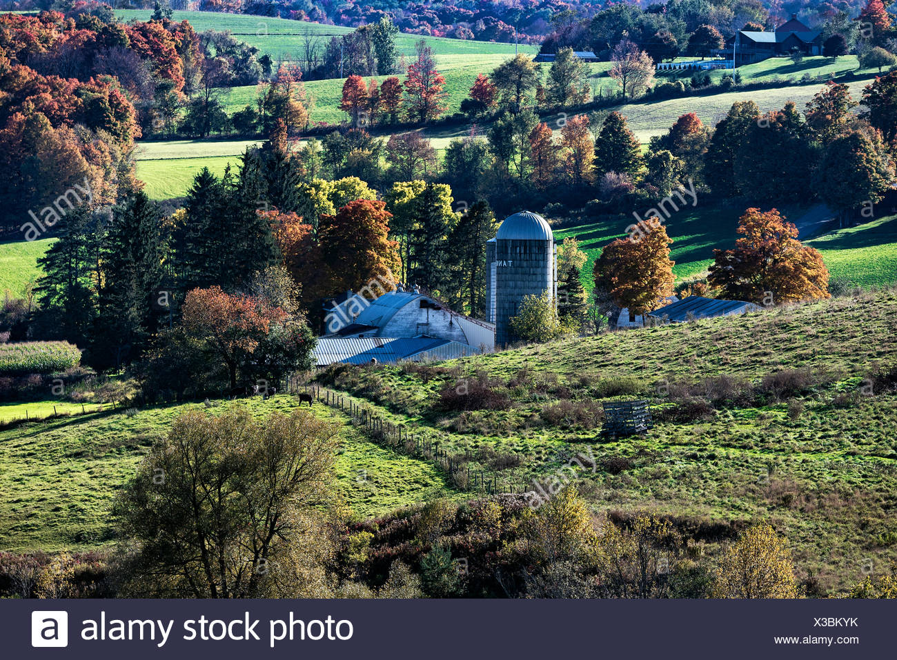 Scenic autumn farm, Madison, New York, USA - Stock Image