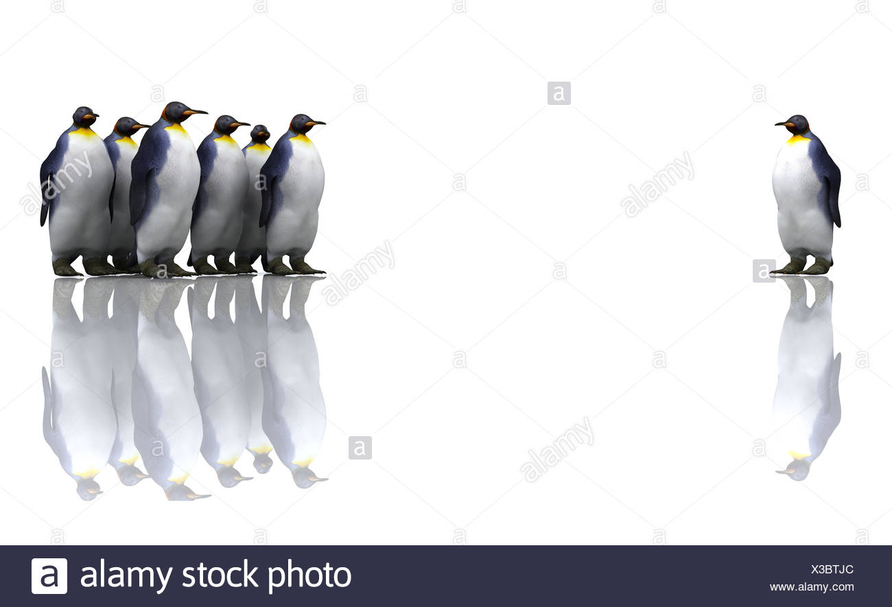 north pole penguin individual - Stock Image