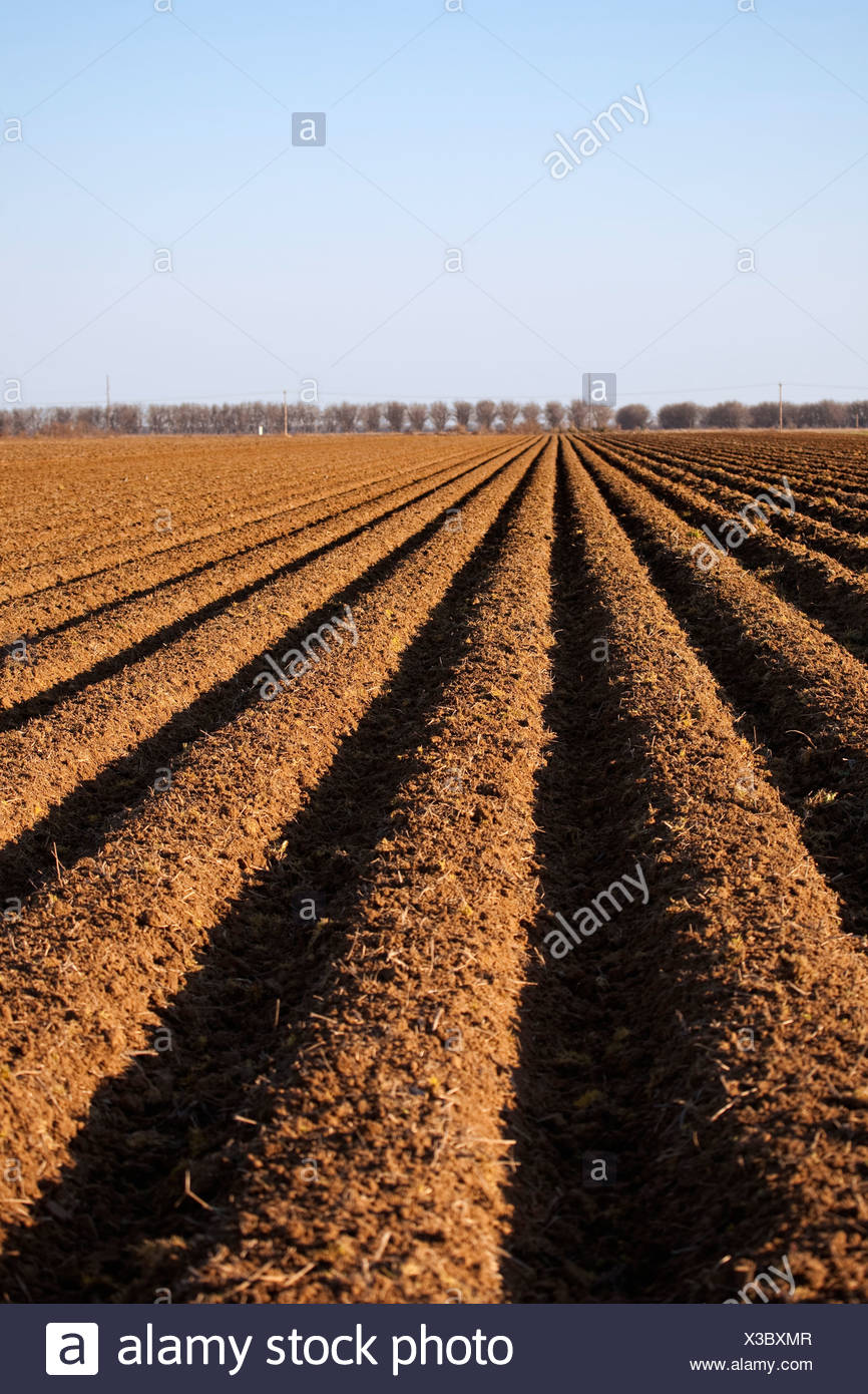 Agriculture - Bedded up field in Spring, prepared and ready for planting of cotton / Eastern Arkansas, USA. - Stock Image