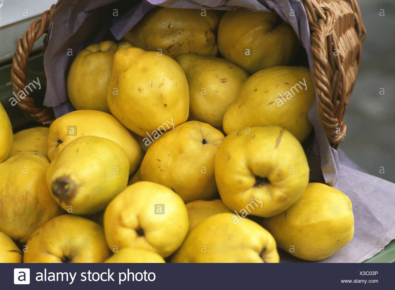 Basket, quinces, Cydonia oblonga, fruit, fruits, autumn fruits, pomes, pear quinces, nutrition healthy, rich in vitamins, freshly, harvest-freshly, harvest, quince harvest, Still life, product photography, Stock Photo