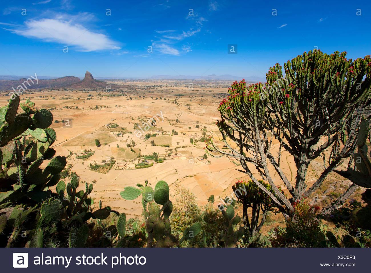 Gerealta, Africa, Ethiopia, highland, view point, cacti - Stock Image