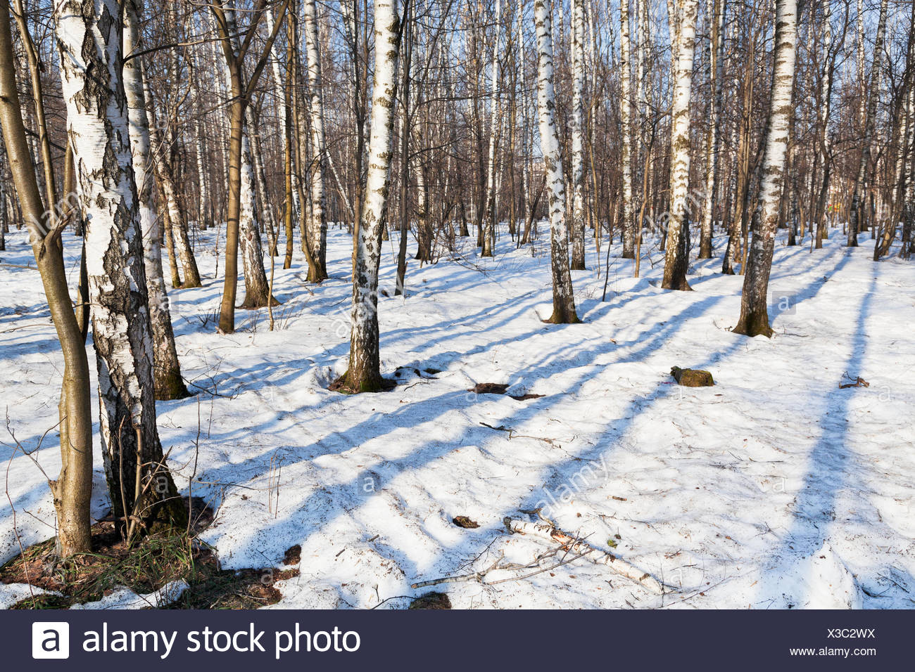 tree park wood cold trunk snow coke cocaine material drug anaesthetic addictive drug spring bouncing bounces hop skipping - Stock Image