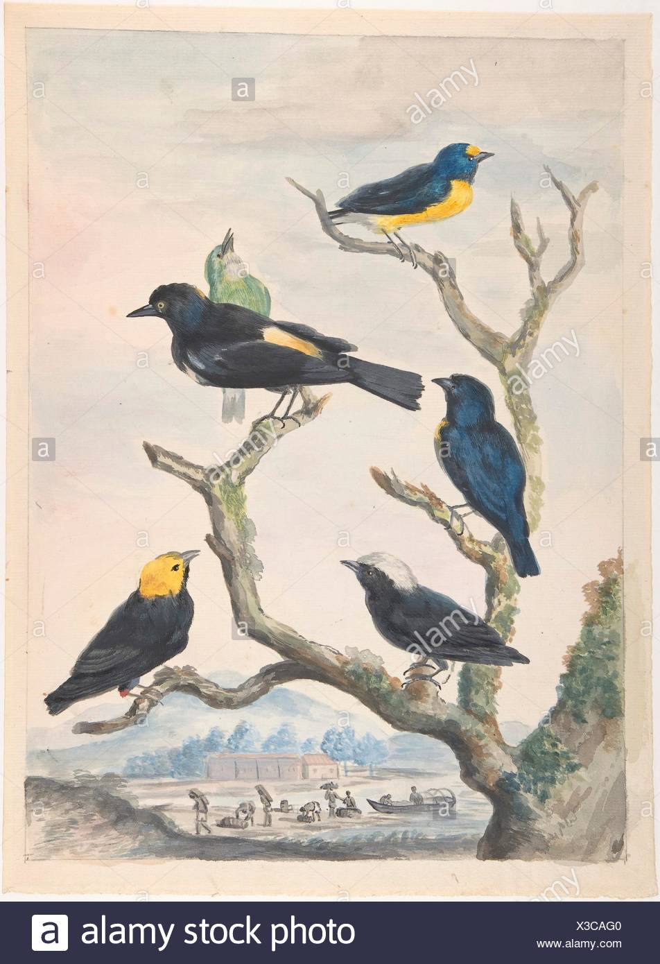 Six South American Birds. Artist: Abraham Meertens (Dutch, 1747-1823); Date: mid-18th-early 19th century; Medium: Watercolor over traces of black - Stock Image