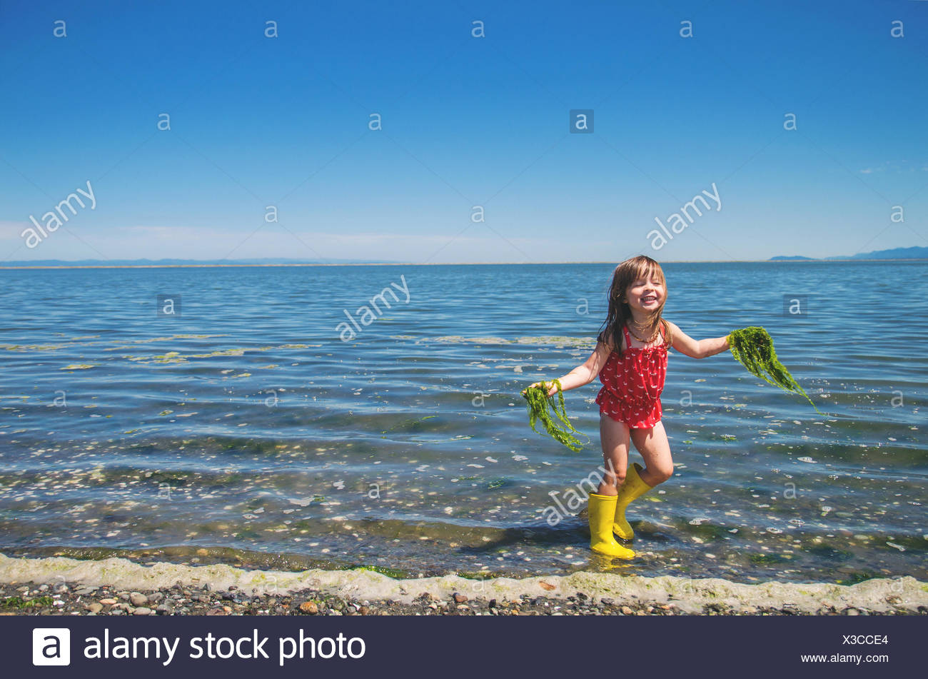 Girl collecting seaweed from the sea - Stock Image