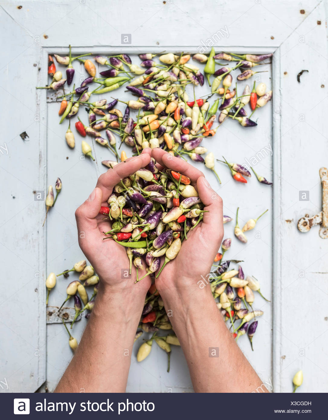 Man's hands keeping handful of small hot Turkish chili peppers, top view - Stock Image