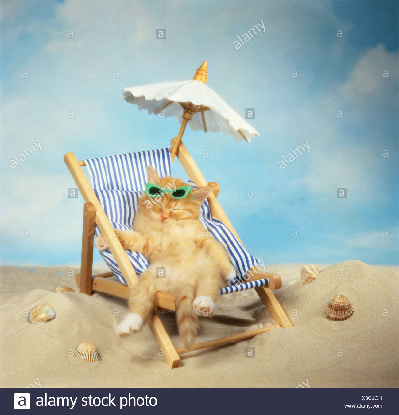 domestic kitten in a deck chair - Stock Image