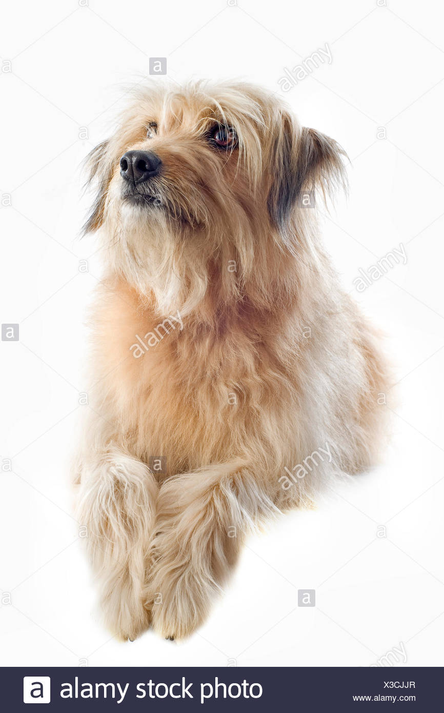 animal pet dog Stock Photo