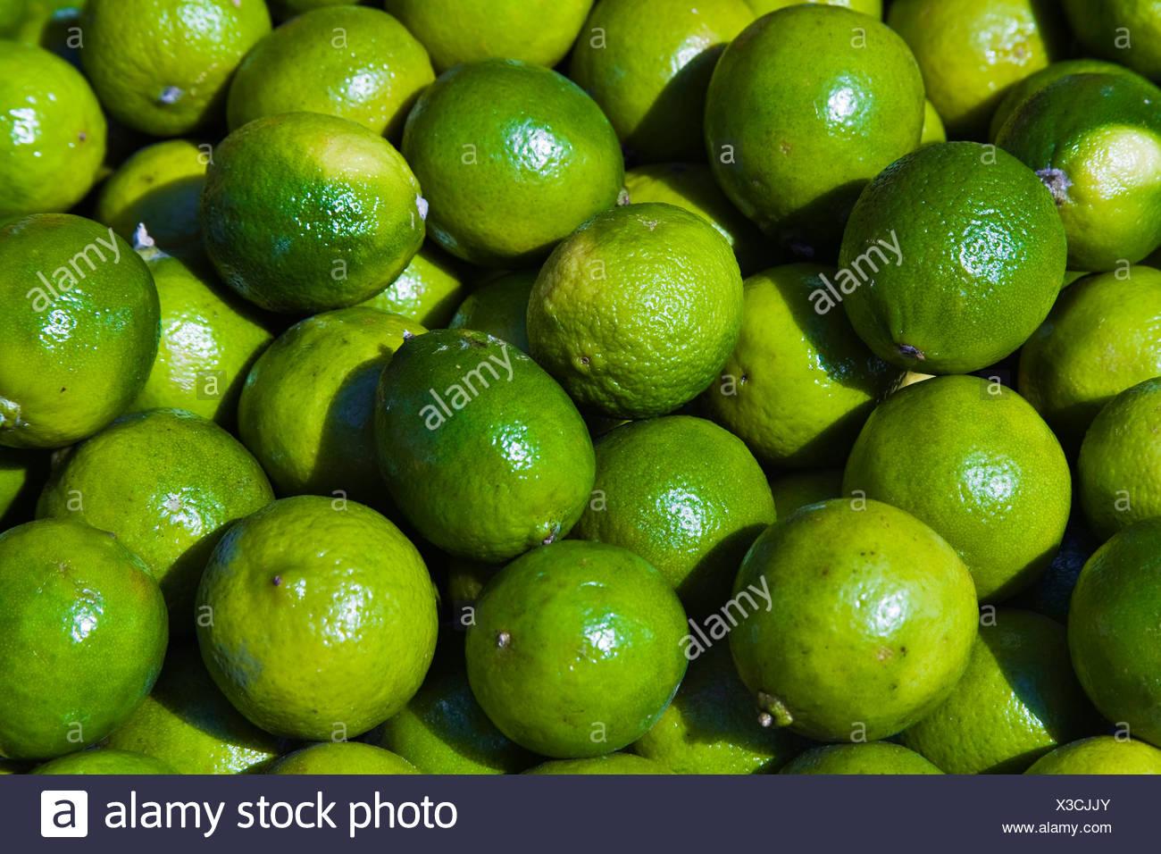 Limes (Citrus × aurantiifolia) Stock Photo